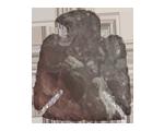 Eagle Shape Arrowhead